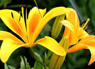 żólte kwiaty
